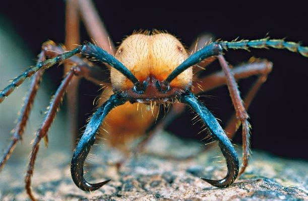 10 histoires extraordinaires chez les fourmis
