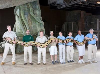 ular terbesar di dunia