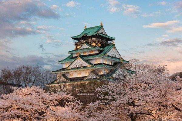 melihat keindahan castle dari jarak jauh dipenuhi bunga sakura
