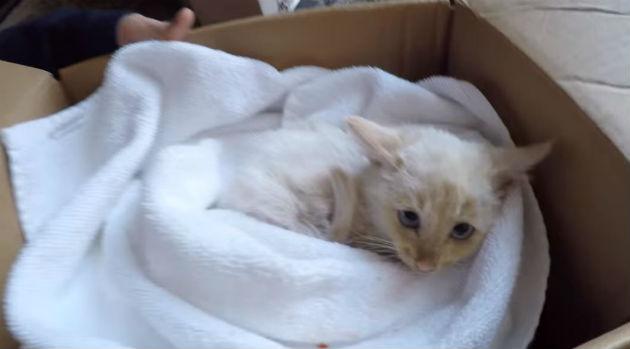 Ajaib, Anak Kucing Mati Hidup Kembali