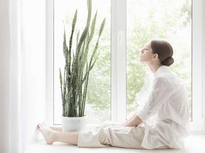 5 Tanaman Ini Bisa Menjadi Pembersih Udara di Rumah