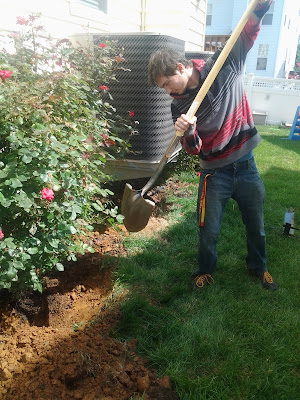 Jake digging roses