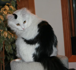 Cat with monkey on back markings