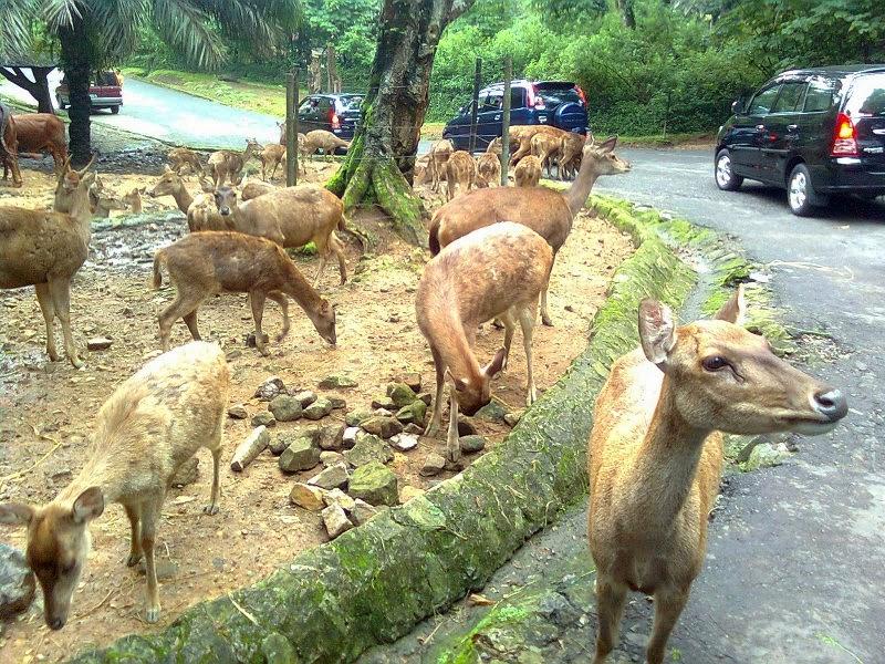 Taman-Safari-Cisarua-Bogor