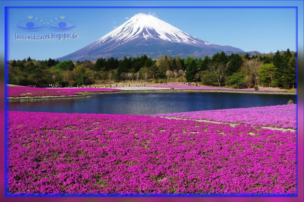 Piękny Japoński Wulkan na Planecie Ziemi - Dywan z Kwiatów