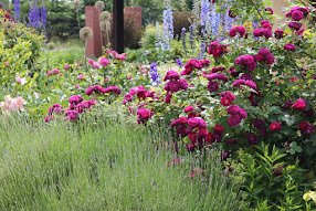 Mój wiejski ogród