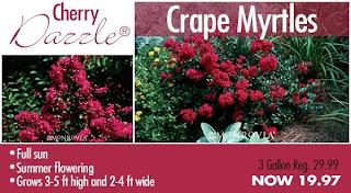 Pike Nurseries Tremendous Tuesday Special Crape Myrtles Flowers Plants Trees Garden Gardening