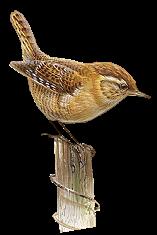pájaro vintage
