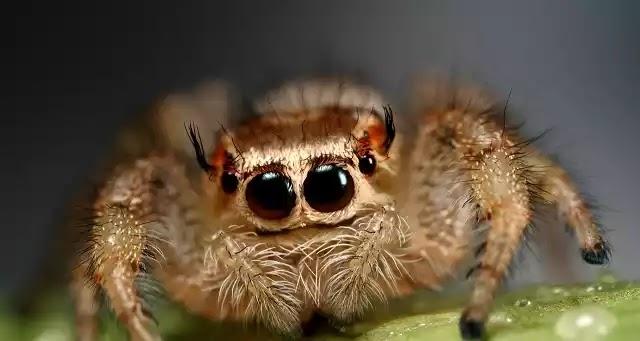 Πώς θα διώξετε τις αράχνες μακριά απ' το σπίτι σας χωρίς χρήση χημικών (vid)