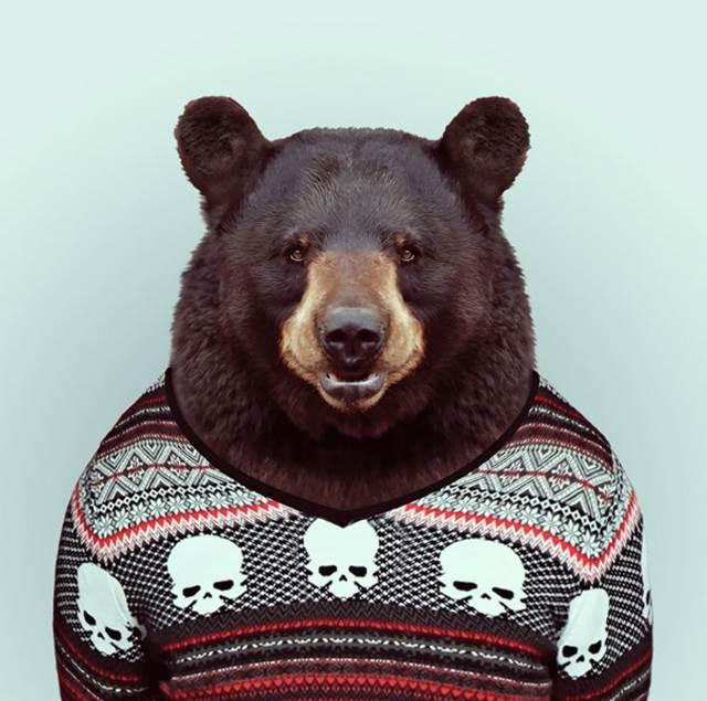 beruang-pakai-sweater