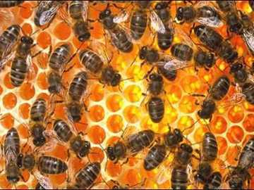 Moelc Page Bagai Lebah Menghimpun Madu Is A Malay
