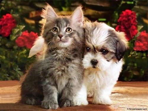 Photo chaton et chiot mignon
