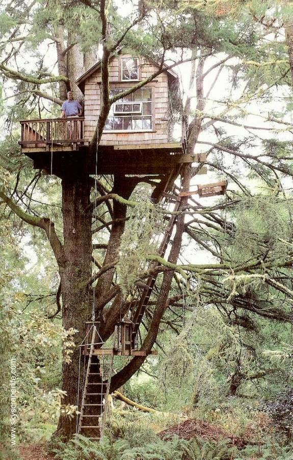 Arquitectura de casas varias caba as de madera - Cabanas en los arboles ...