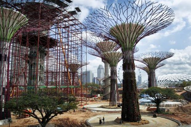 plantas jardim mediterraneoBoa Vista Projetos de Paisagismo Árvores