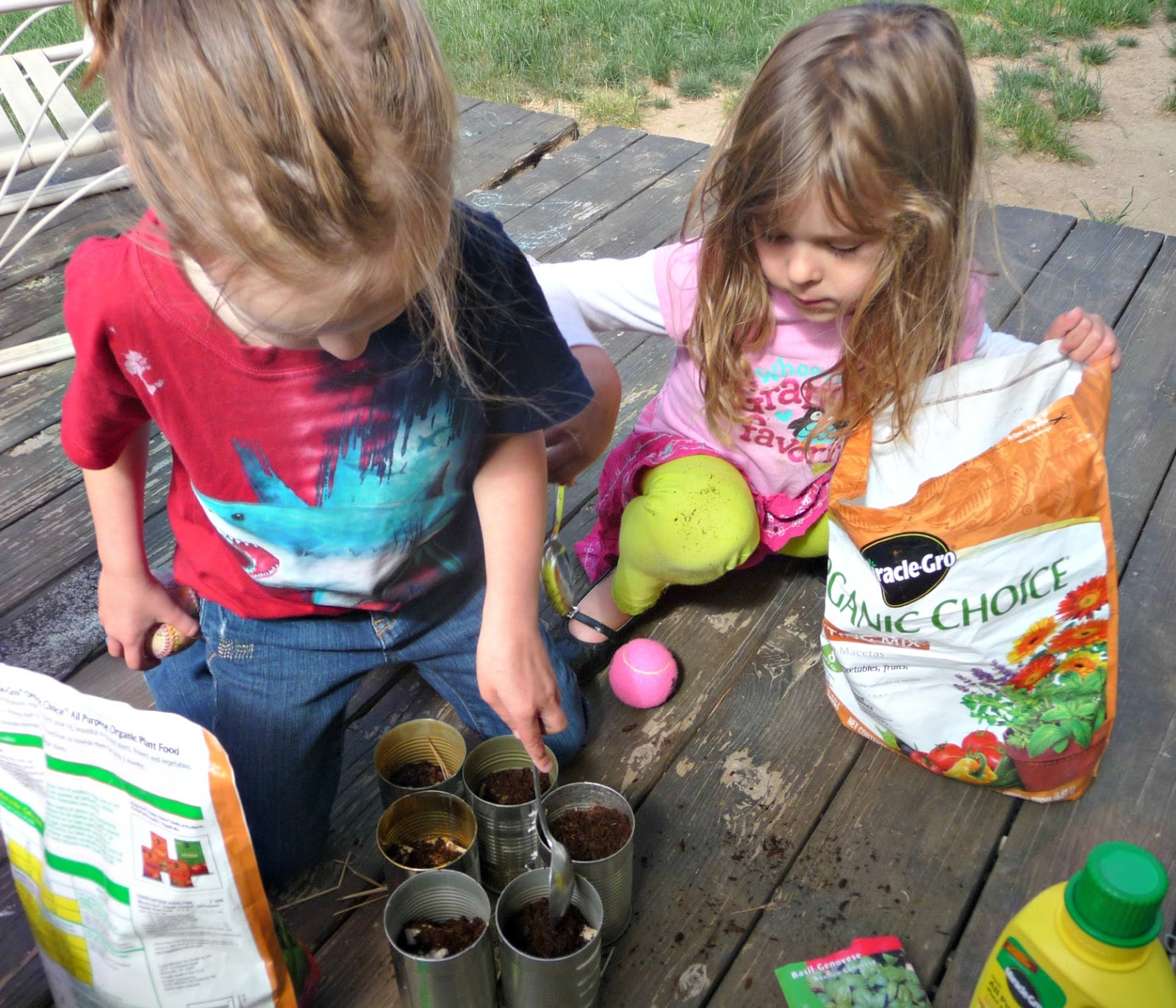 planting basil with kids