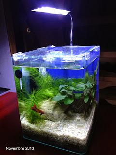 andycam dans le monde des nano nano aquarium 10 litres pour combattant