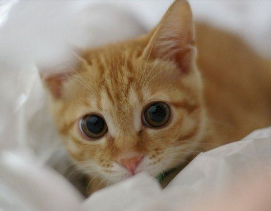 Cute Cat Big Eyes