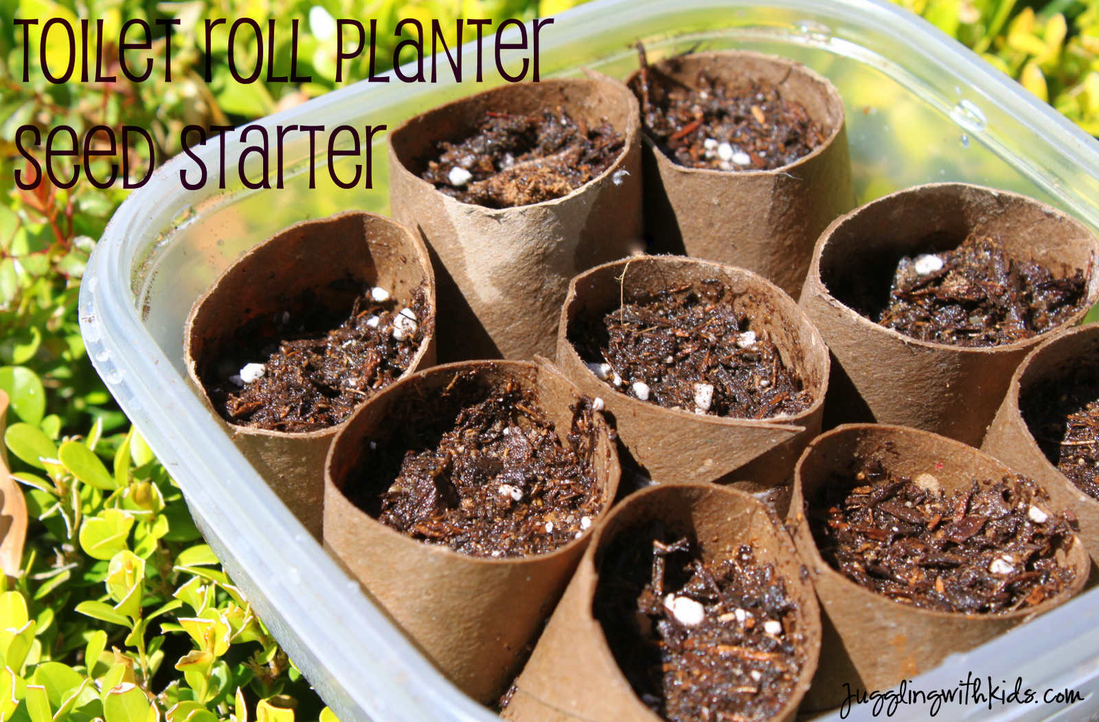 Come Sow With Me – Toilet Roll Planter Seed Starters – Juggling With ...