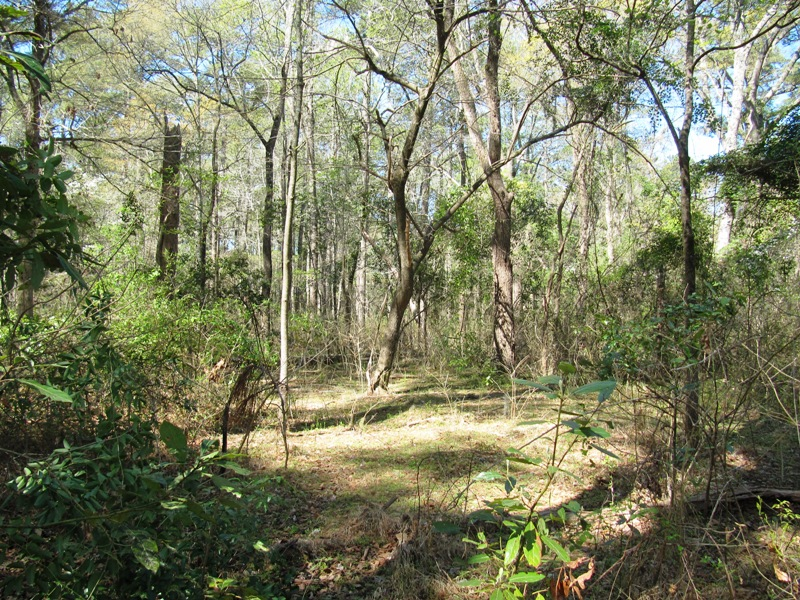 New bern now on vacation until april 25th 2011 new for Croatan national forest cabins