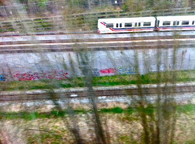 skytrain, tree's, graffiti