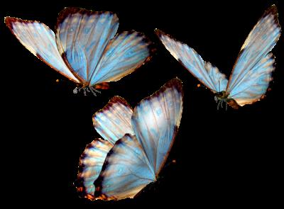 png   borboletas