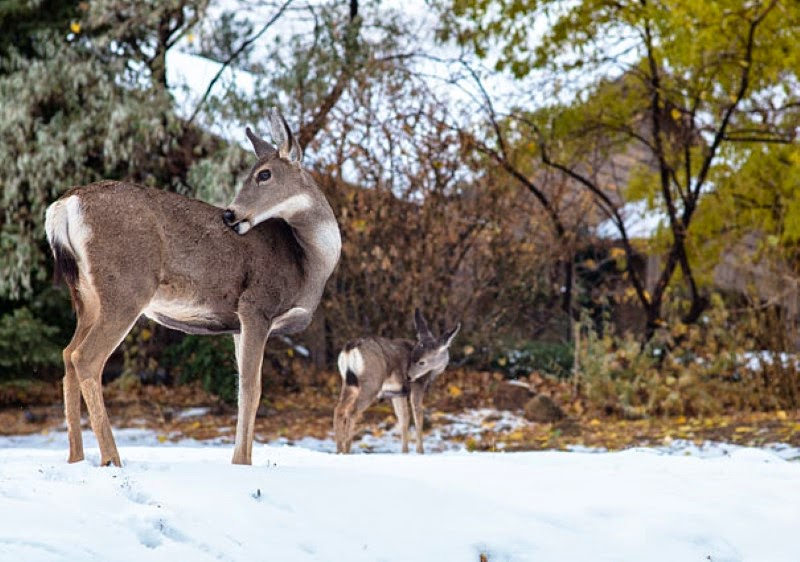 23. A doe and a fawn in Washoe Valley, Nevada. - 30 Animals With Their Adorable Mini-Me Counterparts