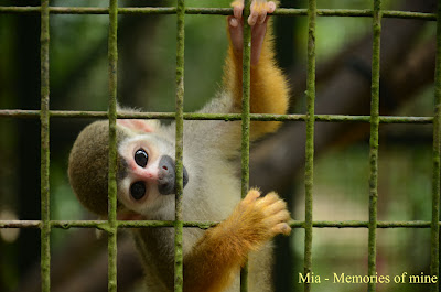 Cerita Si Monyet