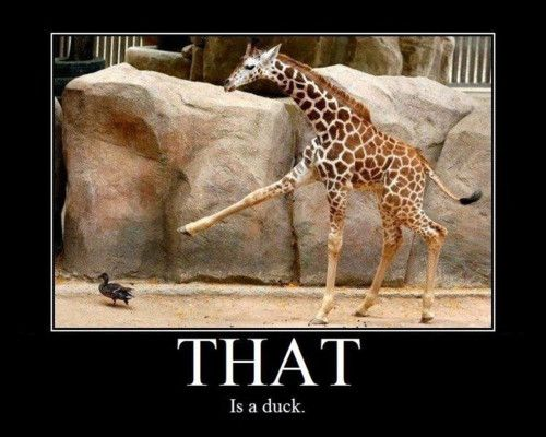 That Is A Duck