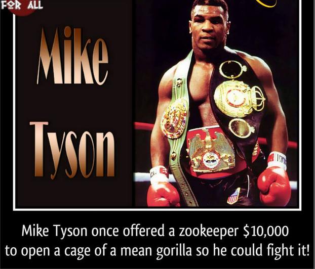 boxer, Iron Mike