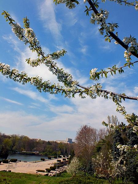 panorama parcul carol aprilie 2013
