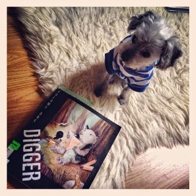 A sleek grey poodle, Murchie, sits on an off-white sheepskin. He wears a blue and white striped t-shirt. In front of him sits a trade paperback copy of Digger. Its cover features a wombat reading a map.