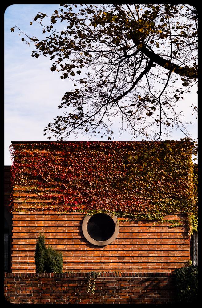 Atrakcyjny budynek z czerwonej cegły pokryty bluszczem. Jesień w gliwicach. fot. Łukasz Cyrus