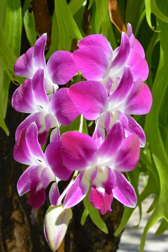 Wat Mai Khao Temple Phuket orchidee