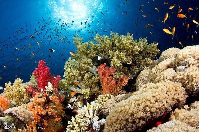 للناس اعماق خطورة البحار amazingmulticoloredcoolbeautifulunderwaterseaworldmarinelife2.jpg