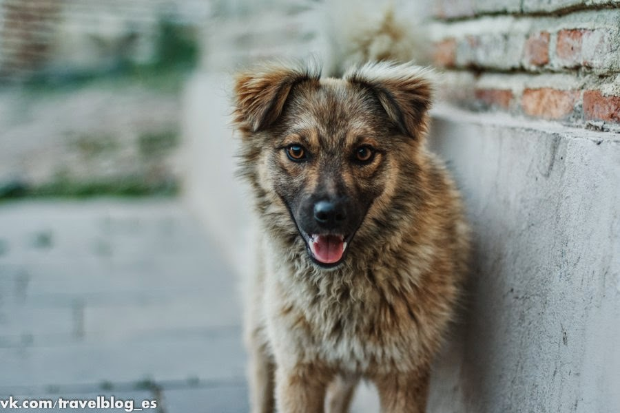 Дружелюбная собачка