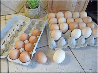 double yolk eggs in shell