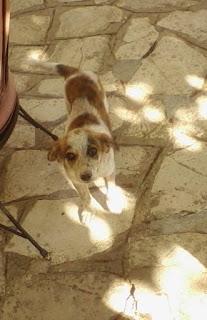 Χαθηκε η Μολι στην Πετρουπολη στις 22/9. Ειναι θηλυκο, 6 μηνων, περιπου 10 κιλα, φιλικο και φοραει μαυρο λουρακι χωρις ταυτοτητα ή τσιπακι.