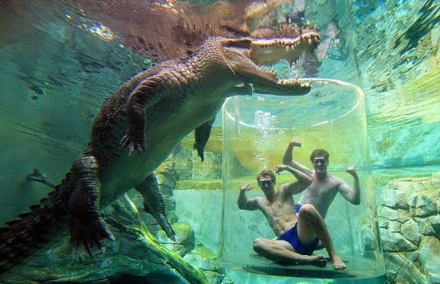 Underwater trip to Australia
