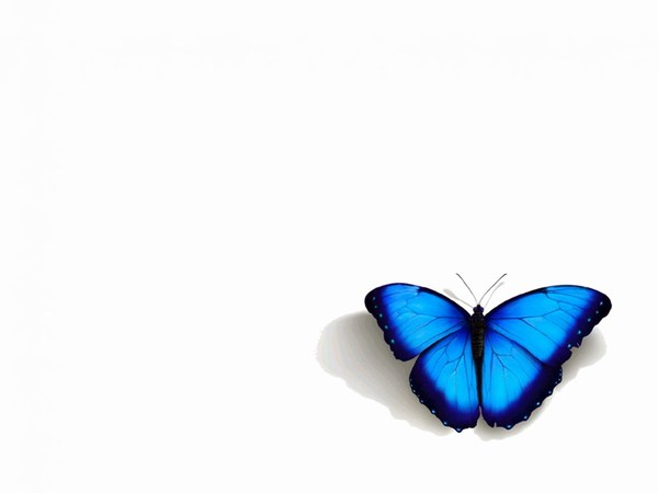 Beautiful Blue Butterfly Full HD Images