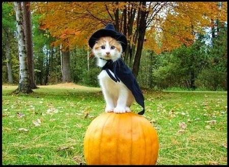 Funny halloween animals 19