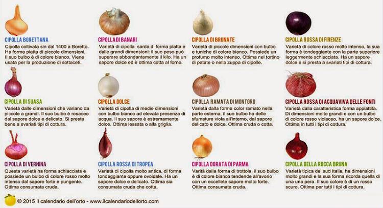 tipi di cipolle