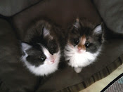 ADOPTED!! THE BEAUTIES ~ JASPER and JASMINE