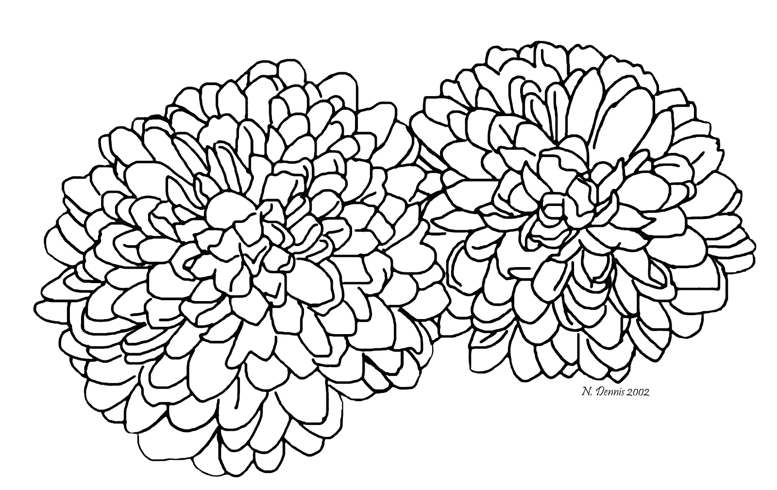 Nora S Nifty Notions September 2012 Chrysanthemum Coloring Page