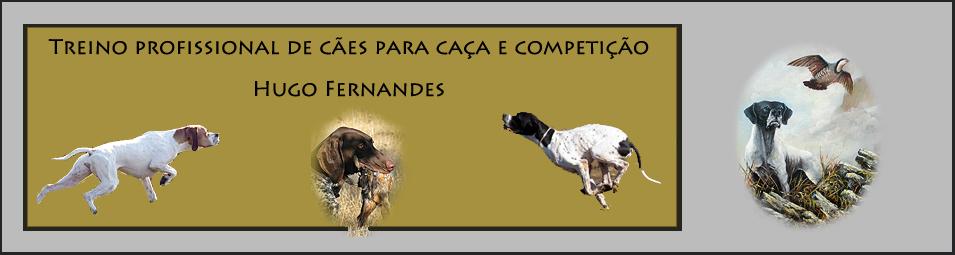 Treino profissional de cães de caça e competição