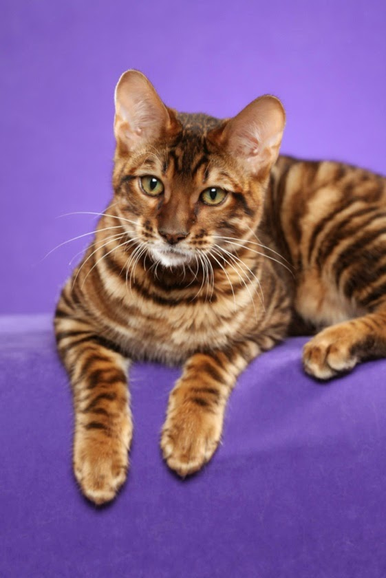 Top 5 Kids Friendly Cat Breeds
