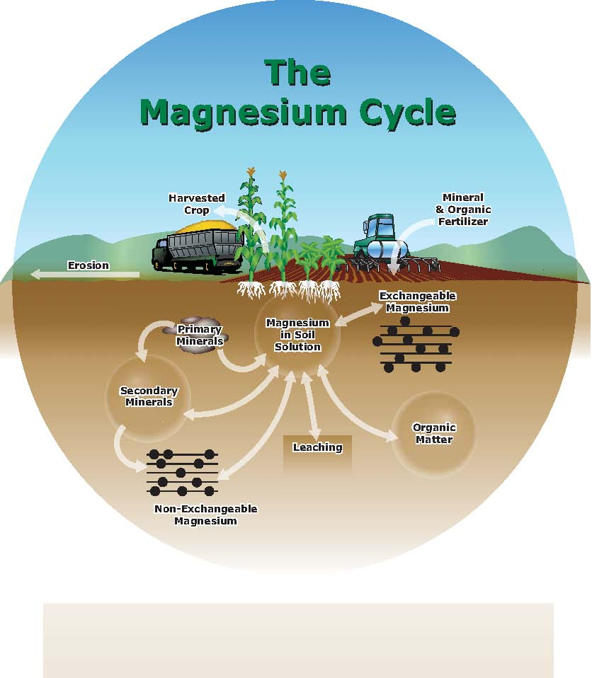 Managing plant nutrients soil and fertilizer magnesium for Minerals in dirt