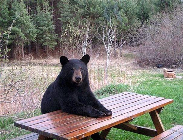 gambar beruang - gambar beruang lucu