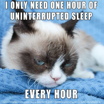 Cat Memes For You For More, Click On The Grumpy Cat Facebook Page
