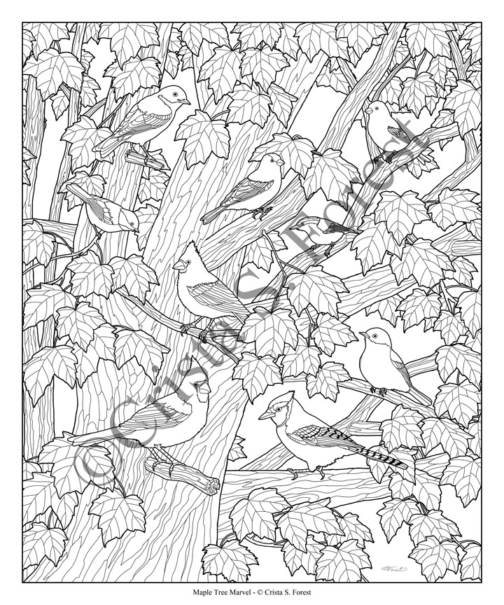 Forest Wildlife Art Birds In Maple Tree Coloring Page Digital