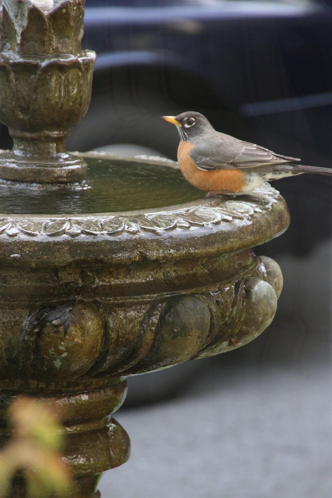 Water Fountain and Bird Bath